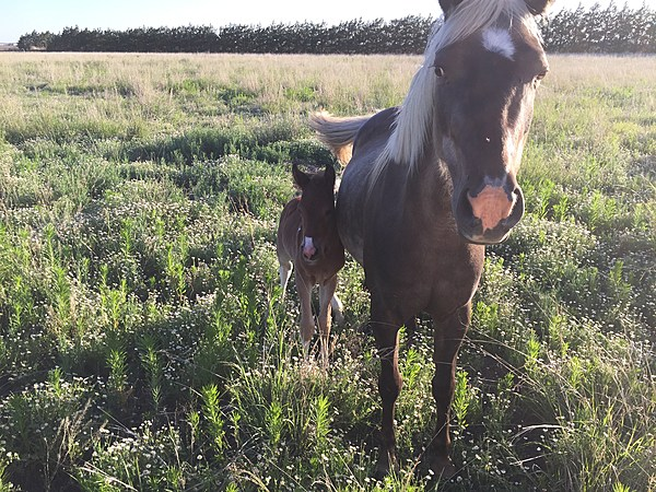 Why Rescuing Horses Is An Amazing And Important Adventure